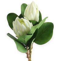Protea Weiß 50cm 2St