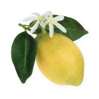 Dekoobst, Zitronen mit Laub Gelb 9cm 4St