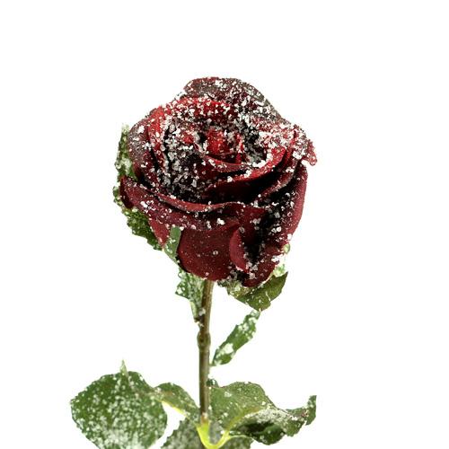 deko rose rot beschneit 6cm 6st gro handel und lagerverkauf. Black Bedroom Furniture Sets. Home Design Ideas