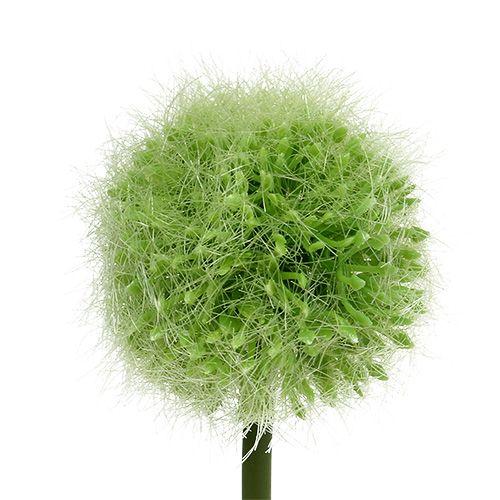 Allium Grün L37,5cm 4St