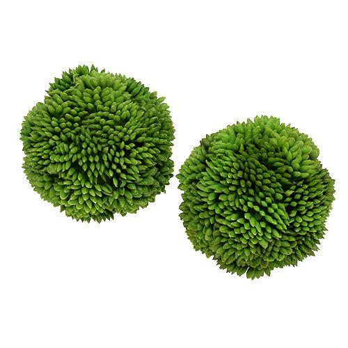 Alliumball 5cm Grün 4St