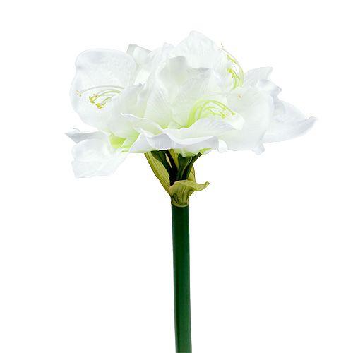 Amaryllis Blume Weiß L 73cm 2St