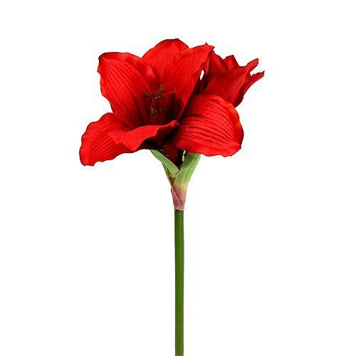 Amaryllis Rot L 68cm 1St