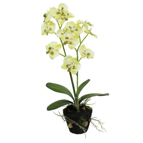 Mini Orchidee grün mit Erdball 30cm