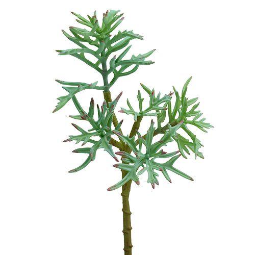Echeveria 33cm Hellgrün