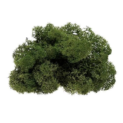 Islandmoos Grün 500g