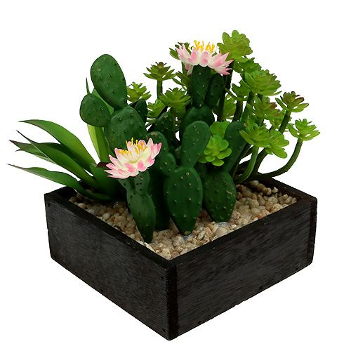 Kaktus mit Blüte 14cm im Holzkasten