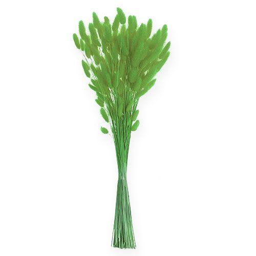 Deko-Gras Apfelgrün Lagurus 100gr