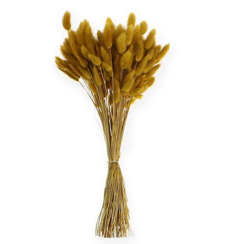 Deko-Gras Goldgelb Lagurus 100gr