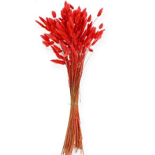Deko-Gras Rot Lagurus 100gr