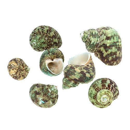 Muschel Mix 2,5cm - 5cm Natur-Grün 400g