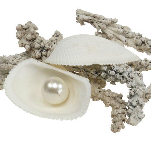 Muschel-Mix mit Perle und Holz Weiß 200g