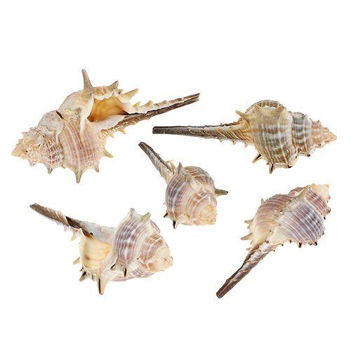 Muschelmix Natur 6cm - 9cm 250g