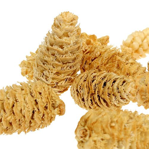 Omorika Zapfen geraspelt gebleicht 600g