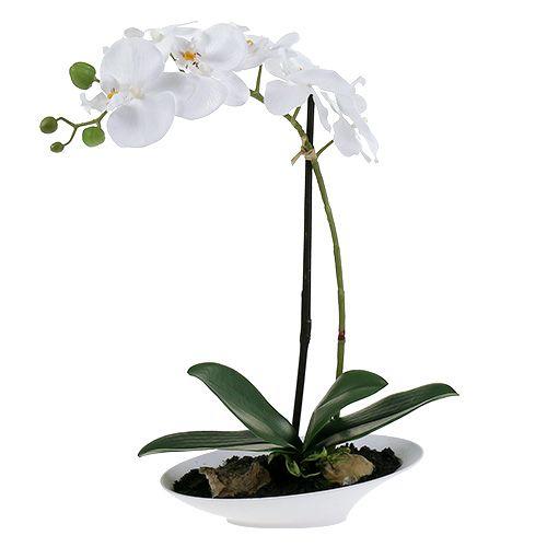 Orchidee Phalaenopsis in Schale Weiß H40cm