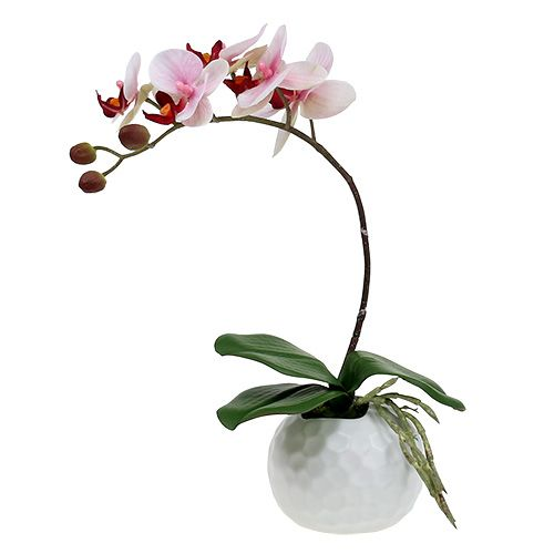 Orchidee Rosa im Keramiktopf 31cm