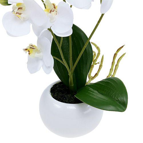 orchideen im topf 30cm wei gro handel und lagerverkauf. Black Bedroom Furniture Sets. Home Design Ideas