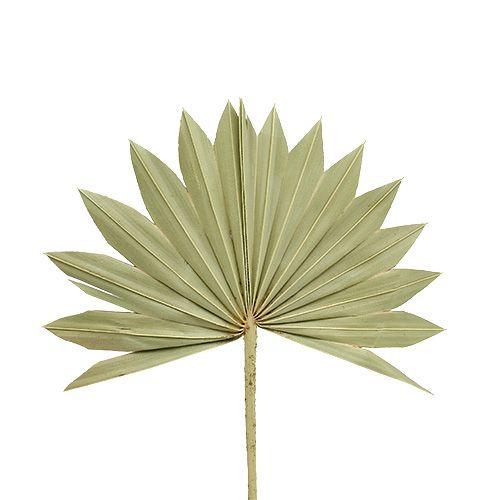 Palmspear Sun mini Natur 50St