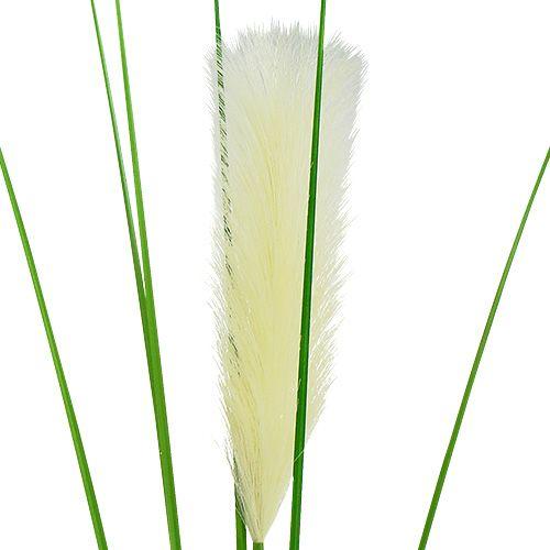 pampasgras wedel creme gr n h100cm gro handel und lagerverkauf. Black Bedroom Furniture Sets. Home Design Ideas