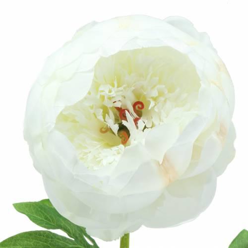 Pfingstrose Weiß 59cm
