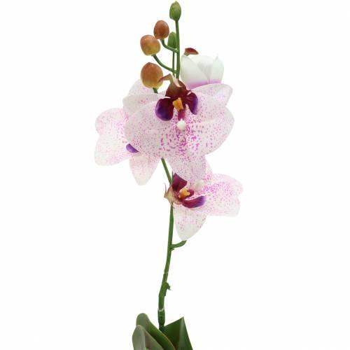 Künstliche Orchidee Phaleanopsis Weiß, Lila 43cm