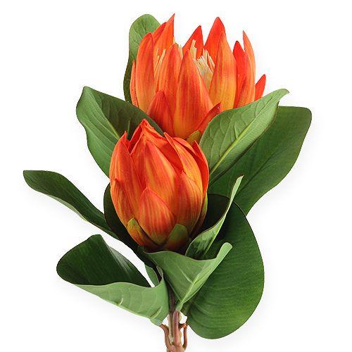 Protea Orange 50cm 2St