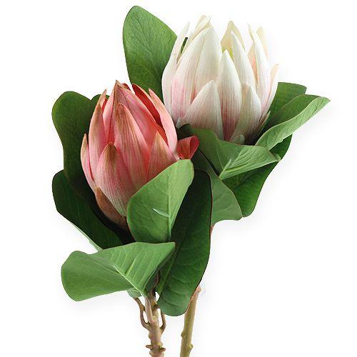 Protea Rosa 50cm 2St