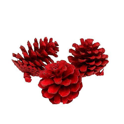 Schwarzkieferzapfen Rot 50St