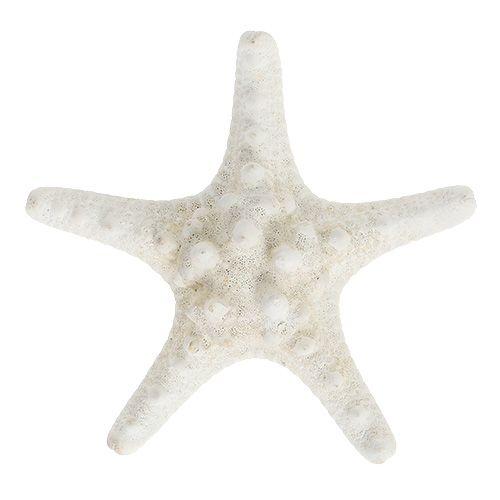 Seestern 9cm - 11cm Weiß 20St