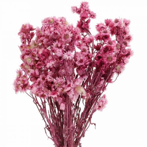Trockenblumen Rosa Trockenblumenstrauß Getrocknete Blumen Pink H21cm