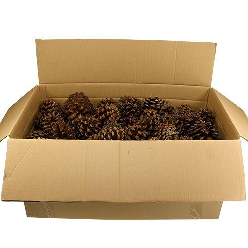Kiefernzapfen groß Mix 14kg