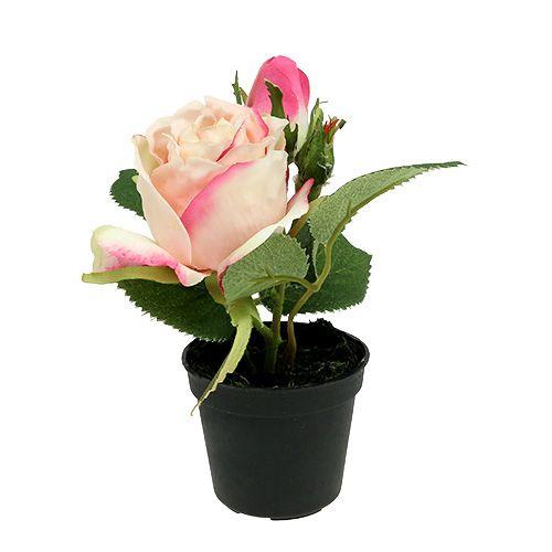 tischdeko rose im topf creme 14cm gro handel und lagerverkauf. Black Bedroom Furniture Sets. Home Design Ideas