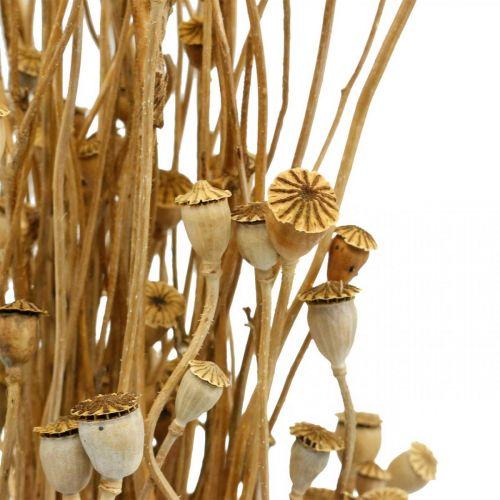 Trockenblumen Mohn-Kapseln Natur getrocknet wild Trockendeko Bund 100g