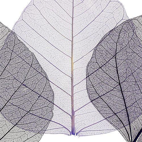 Willowblätter skelettiert Lila sort. 200St