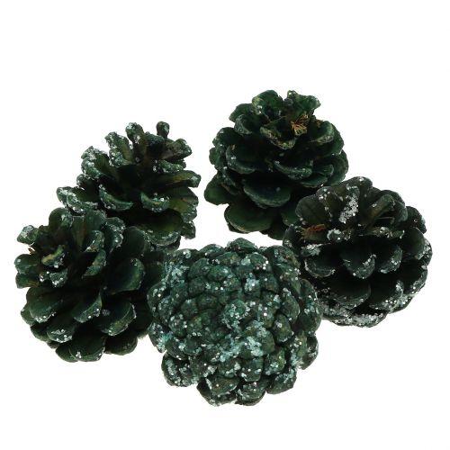 Kiefernzapfen Grün vereist 200g