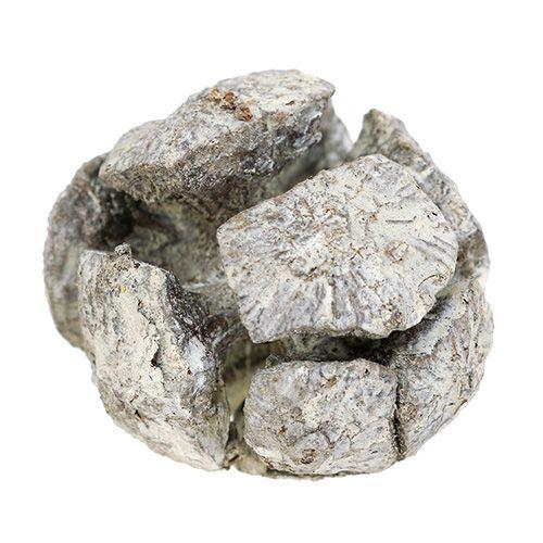 Zypressen Zapfen 3cm Weiß gewaschen 500g