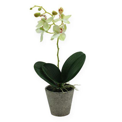 Orchidee im Topf Hellgrün 26cm
