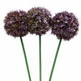 Zierlauch Allium künstlich Lila 70cm 3St