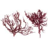 Korallenzweig Rot weiß gewaschen 500g