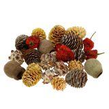 Exoten Mix Trockenfrüchte und Zapfen Natur 500g