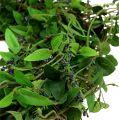 Blätterkranz mit Lavendel 50cm