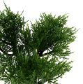 Bonsai Baum im Topf 20cm