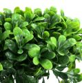 Buchsbaum Zweig grün L20cm 12St