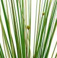 Graszweig mit Blüten 58cm Grün 6St
