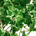 Kunstpflanzen Efeu 100cm