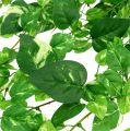 Scindapsus Ranke künstlich 90cm