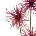 Seidenblumen Xanthium erika 63cm 4St