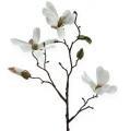 Deko-zweig Magnolie 40cm Weiß 4St